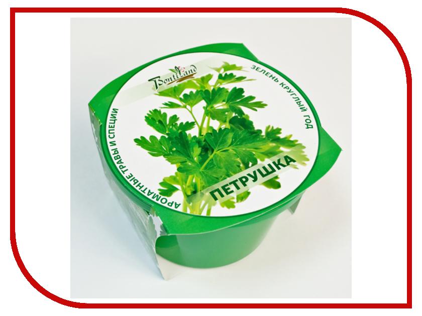 Растение BontiLand Зелень круглый год Петрушка 411807