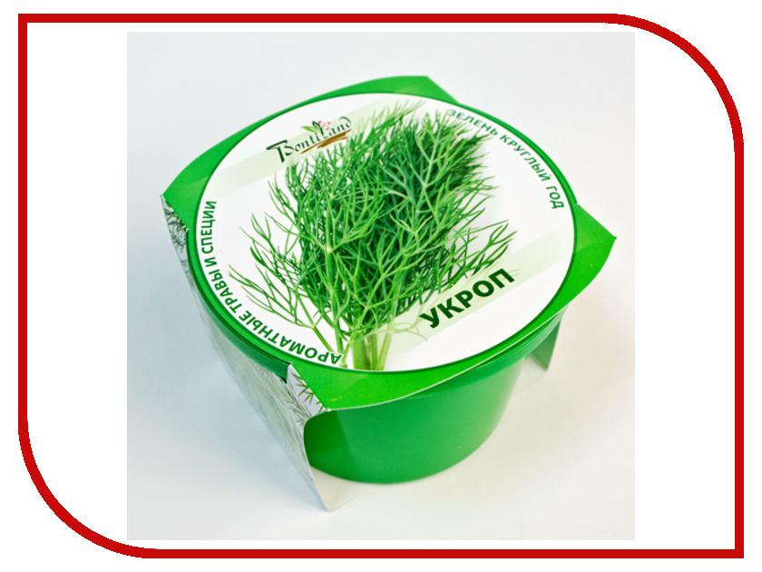 Растение BontiLand Зелень круглый год Укроп 411814