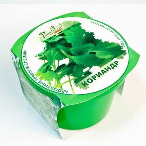 Растение BontiLand Зелень круглый год Кориандр 411821
