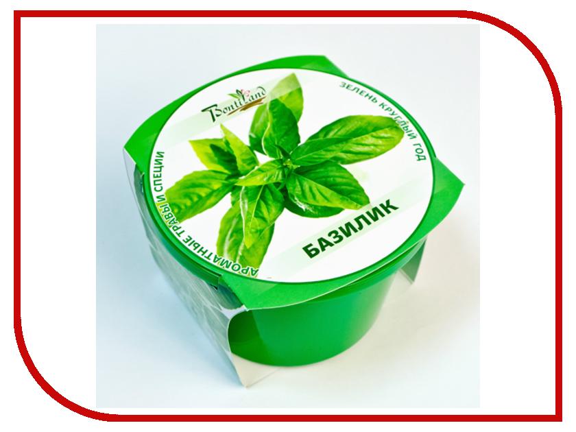 Растение BontiLand Зелень круглый год Базилик 411838