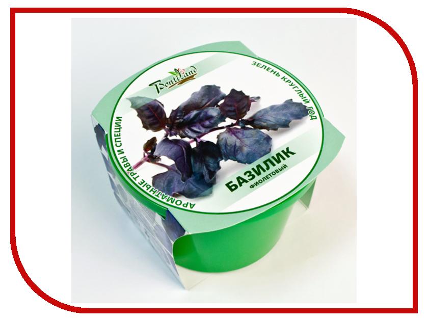Растение BontiLand Зелень круглый год Базилик Purple 411845