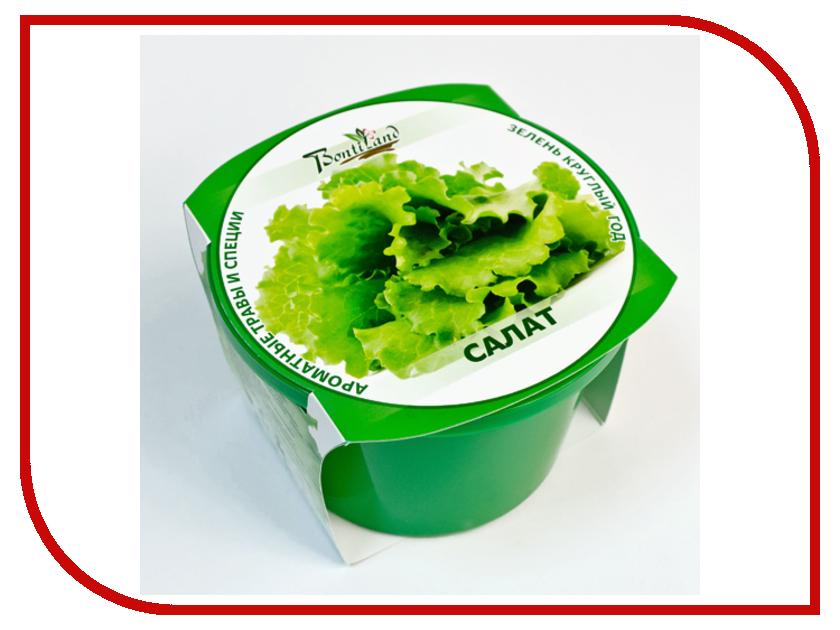 Растение BontiLand Зелень круглый год Салат 411869<br>