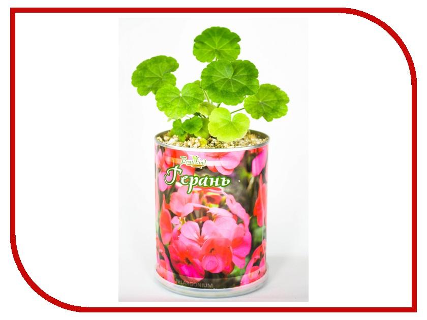 Растение BontiLand Герань 410435