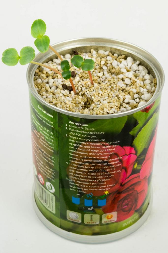 Растение BontiLand Бальзамин 410503
