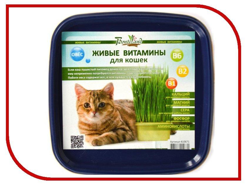 Растение BontiLand Живые ВИТАМИНЫ для кошек Овес 410671