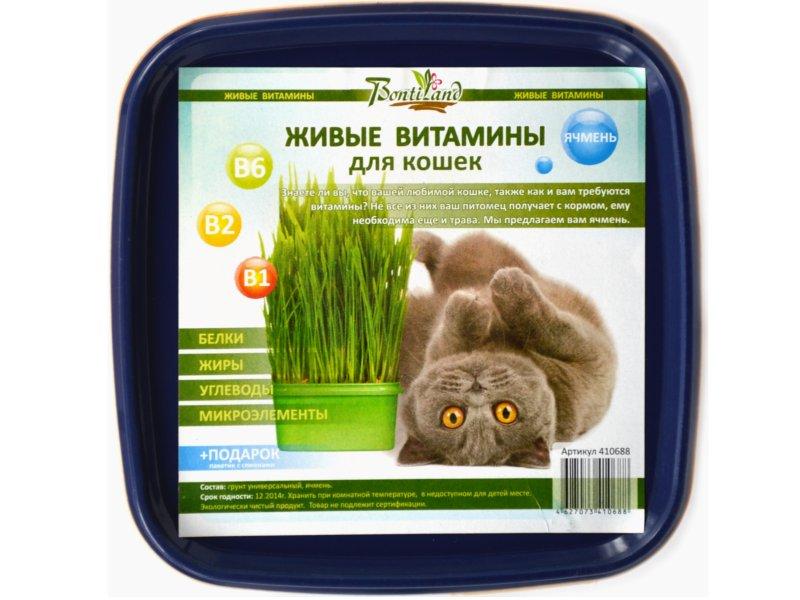 Растение BontiLand Живые ВИТАМИНЫ для кошек Ячмень 410688