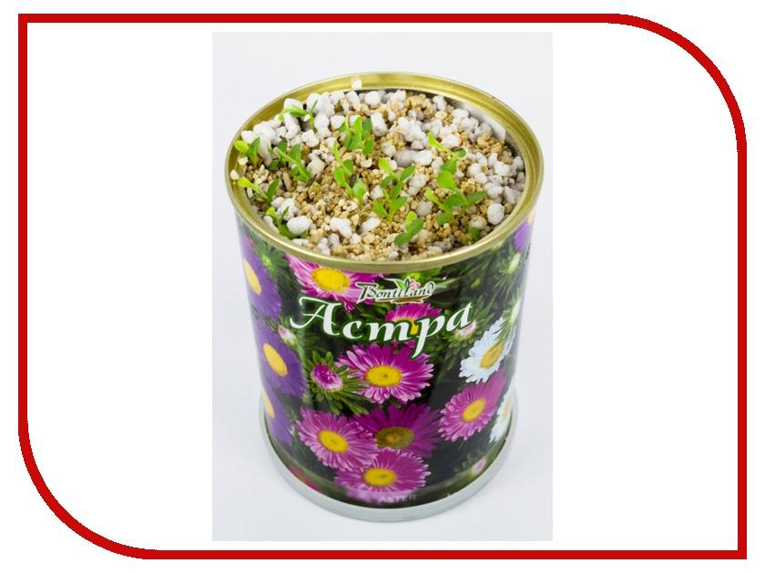 Растение BontiLand Астра 77008