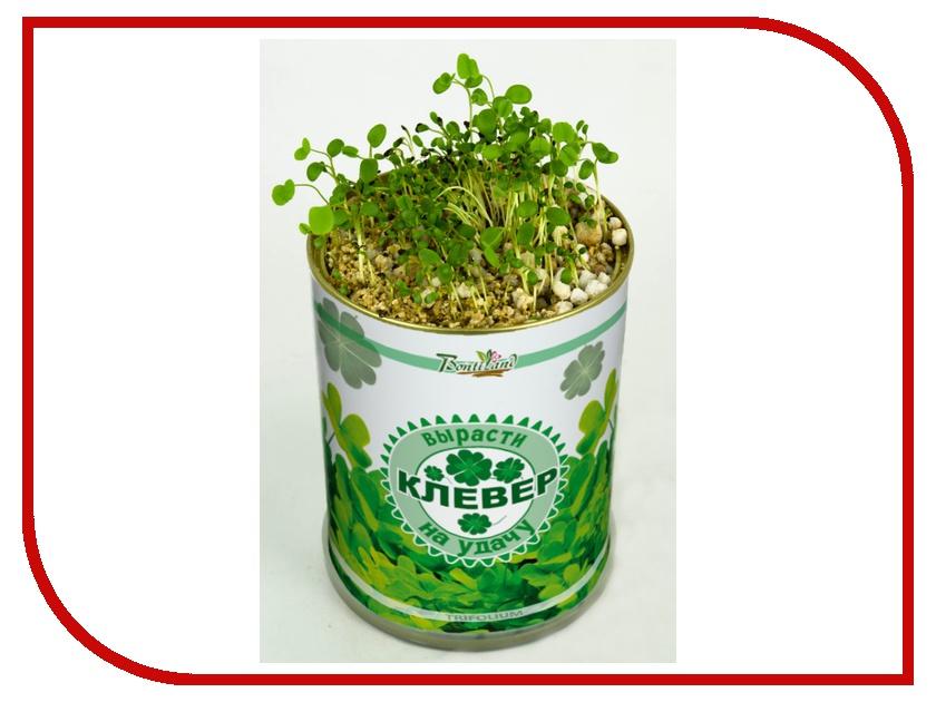 Растение BontiLand Клевер на удачу 410497