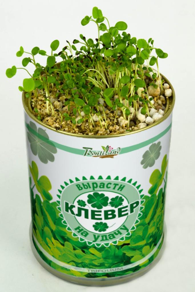 Растение BontiLand Клевер на удачу 410497<br>