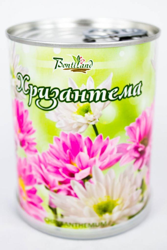 Растение BontiLand Хризантема 410510 растение bontiland севастополь пальма из крыма 415041