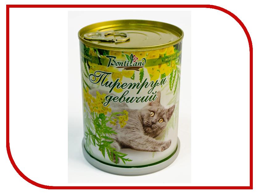 Растение BontiLand Живые витамины для кошек 410725 Пиретрум девичий<br>
