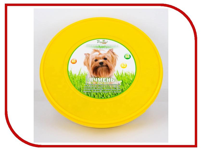 Растение BontiLand Живые витамины для собак 412170 Ячмень