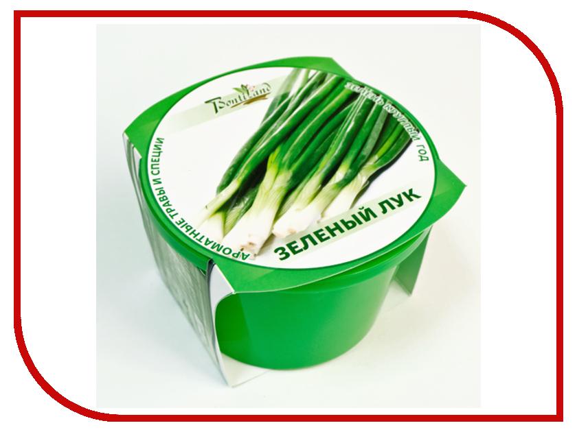 Растение BontiLand Зелень круглый год 411852 Зеленый лук