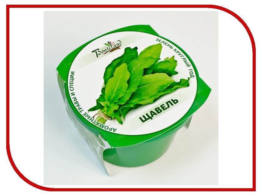 Растение BontiLand Зелень круглый год 411876 Щавель<br>