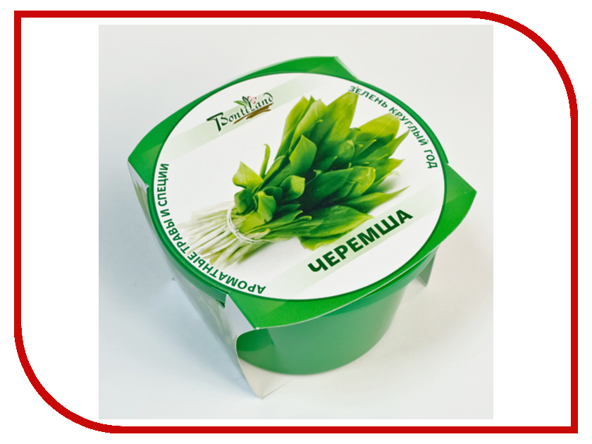 Растение BontiLand Зелень круглый год 411883