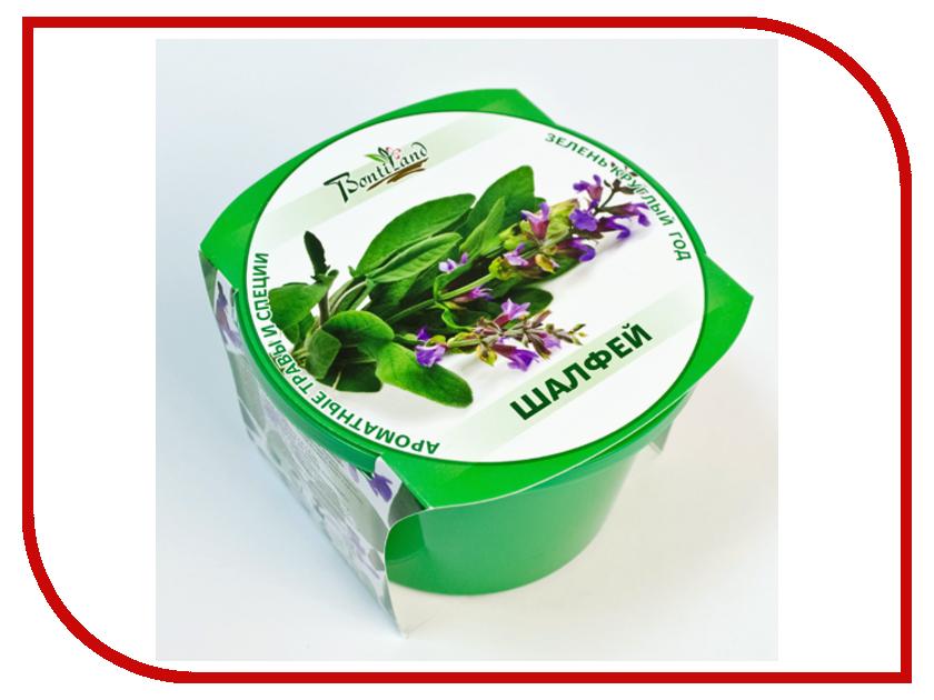 Растение BontiLand Зелень круглый год 411913 Шалфей