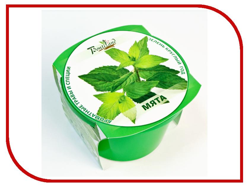 Растение BontiLand Зелень круглый год 411951 Мята