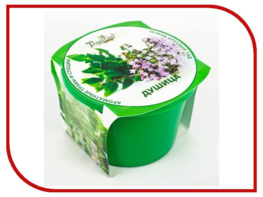 Растение BontiLand Зелень круглый год 411982 Душица