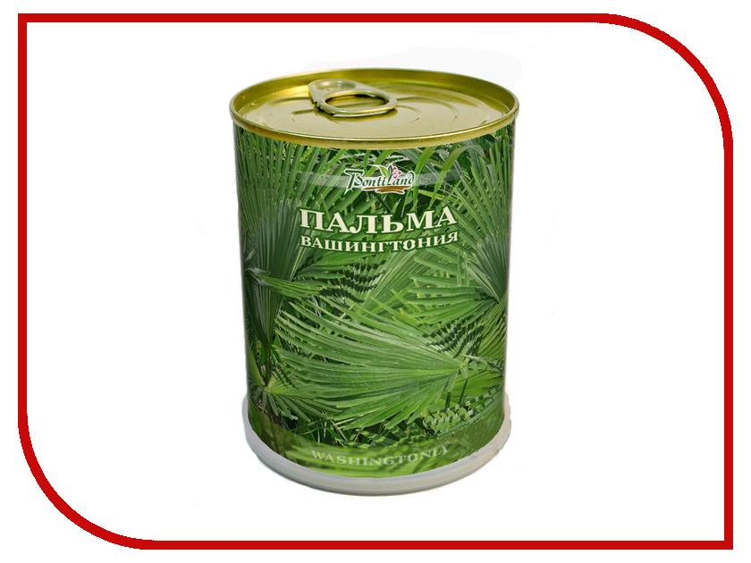 Растение BontiLand Пальма Вашингтония 411180<br>