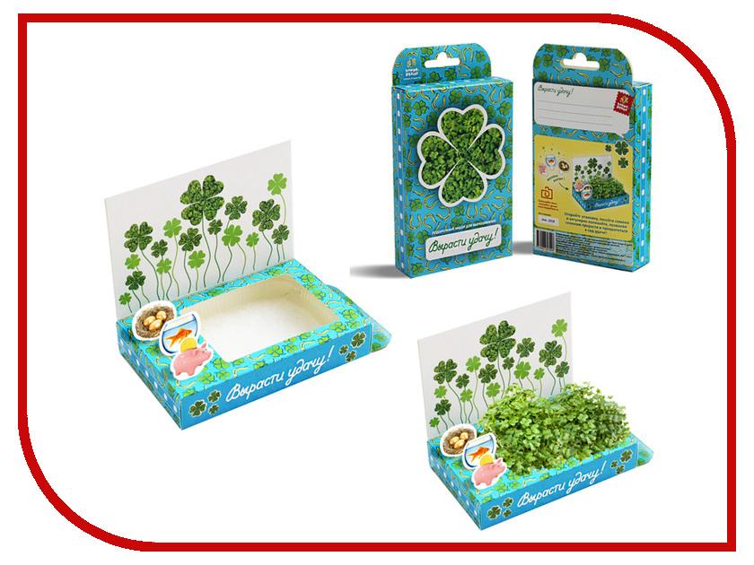Растение Happy Plant hps-207 Подарочный набор Поздравляю-Вырасти удачу!<br>