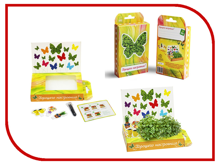 Растение Happy Plant hps-209 Подарочный набор Поздравляю-Хорошего настроения!