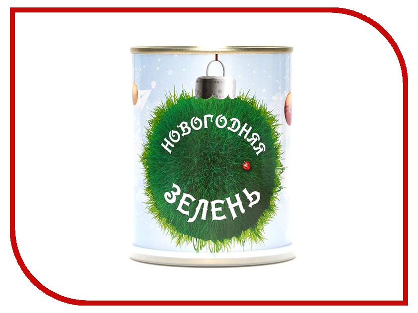Растение BontiLand Новогодняя зелень 412675