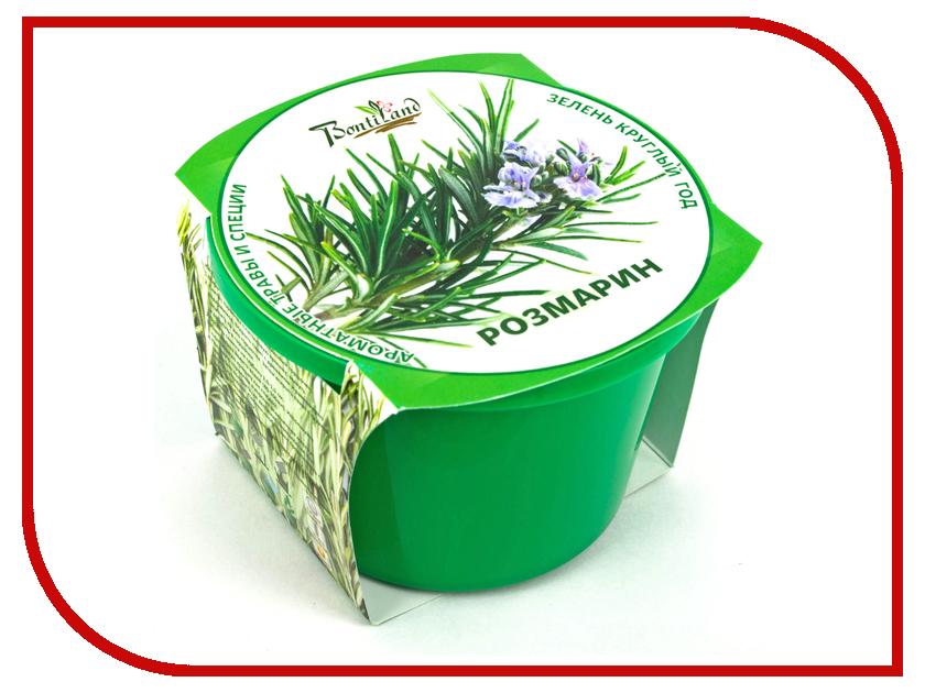 Растение BontiLand Зелень круглый год Розмарин 411272