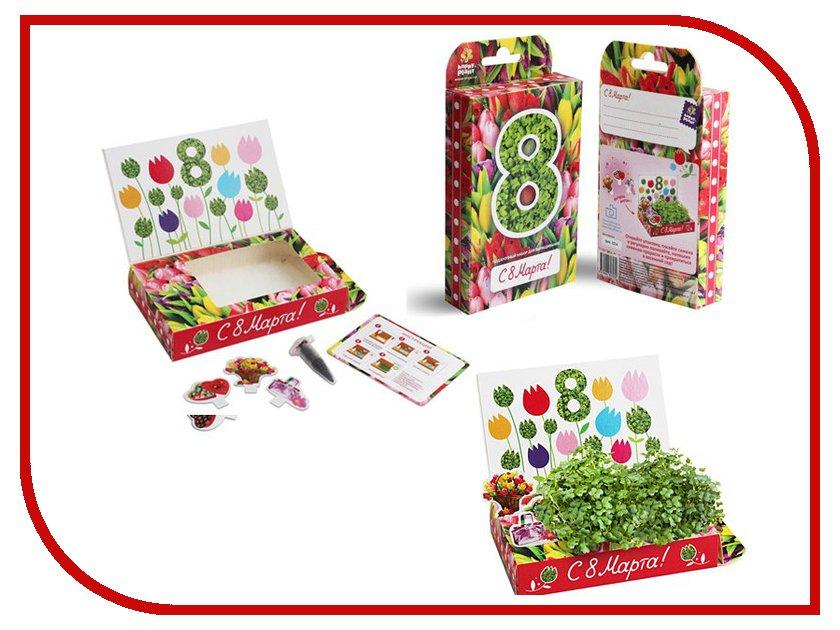 Растение Happy Plant hps-204 8 Марта Тюльпаны