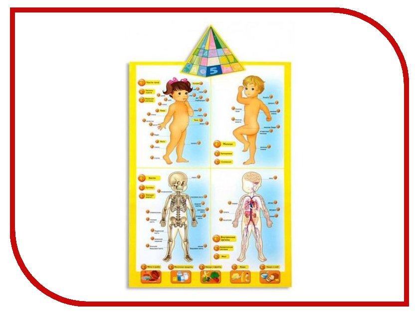 Игрушка Пирамида открытий Говорящая анатомия 13129/ANATOMY POSTER<br>