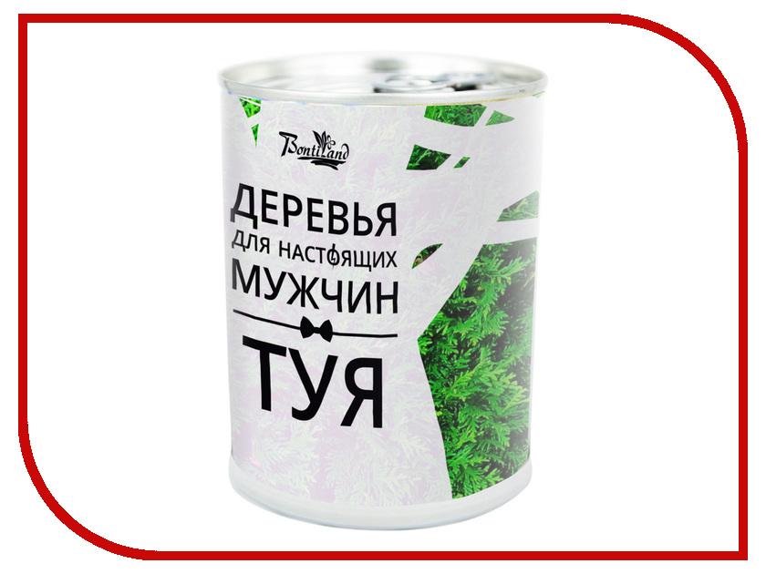 Растение BontiLand Деревья для настоящих мужчин 410831 Туя