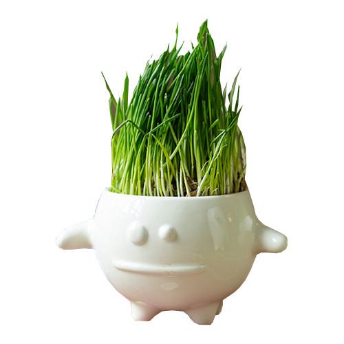 Растение Экочеловеки Eco Кру 8003<br>