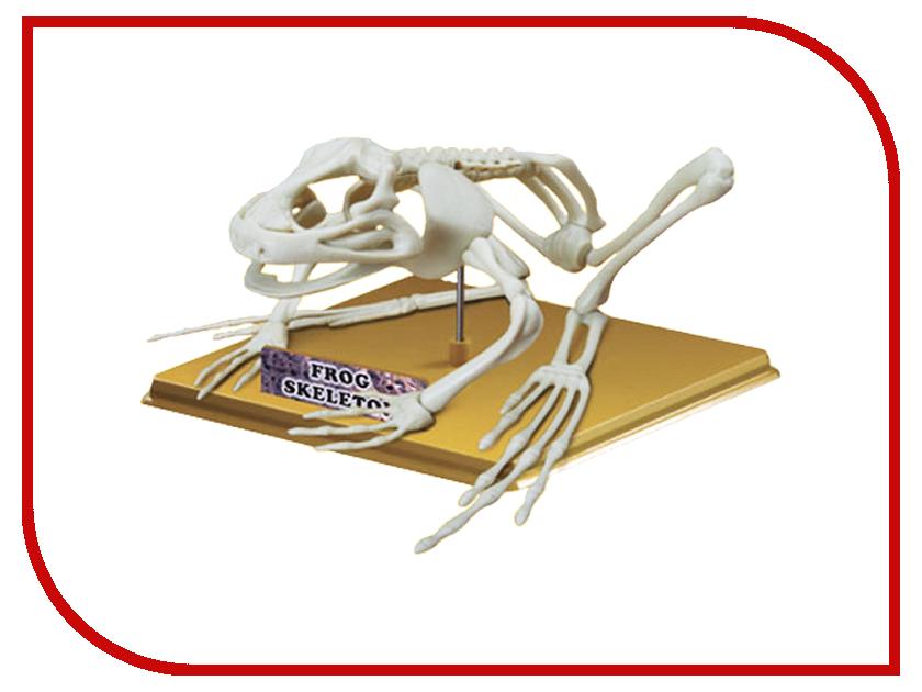 Игрушка Eastcolight Скелет лягушки 28201<br>