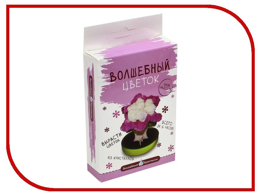 Набор для выращивания кристаллов Bumbaram Пурпурный цветок CD-131
