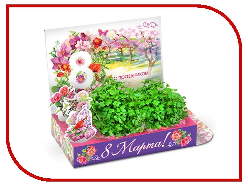 Растение Happy Plant hps-232 Живая открытка Тюльпаны