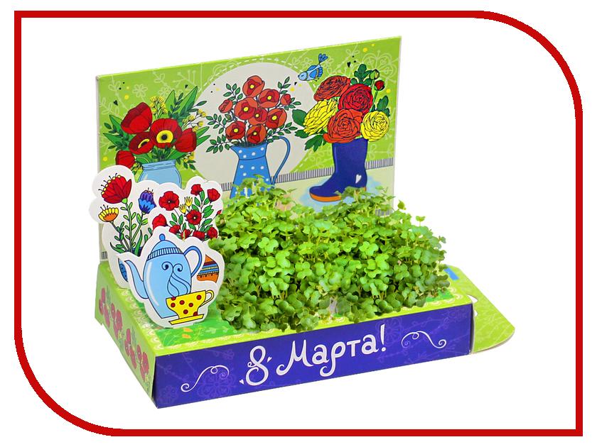 Растение Happy Plant Живая открытка Маки HPS-231