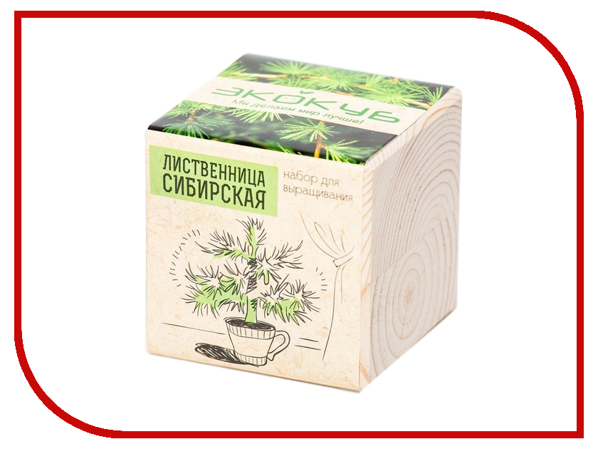 Растение Megamind Эко куб Лиственница сибирская
