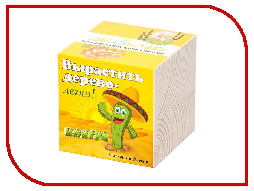 Растение Megamind Эко куб Кактус