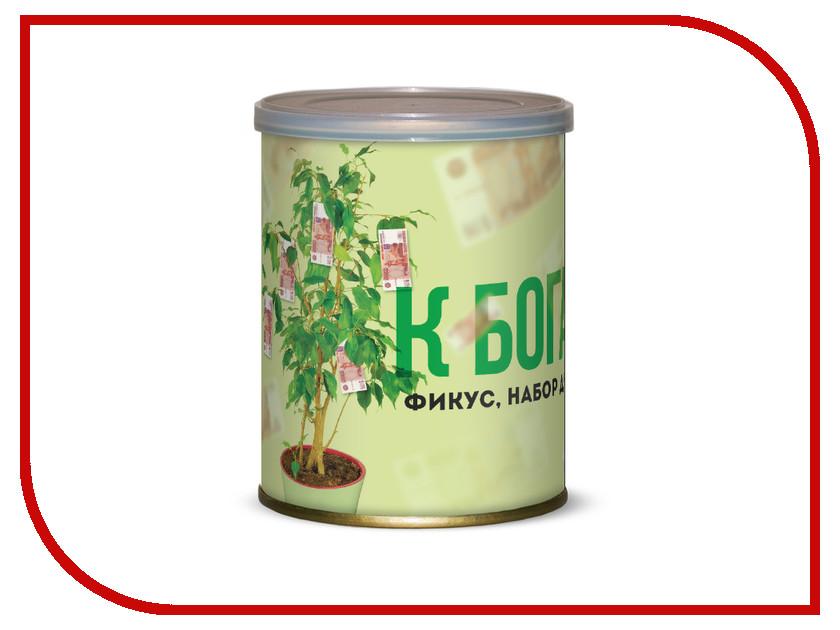 Растение BontiLand Фикус К богатству! 415089<br>