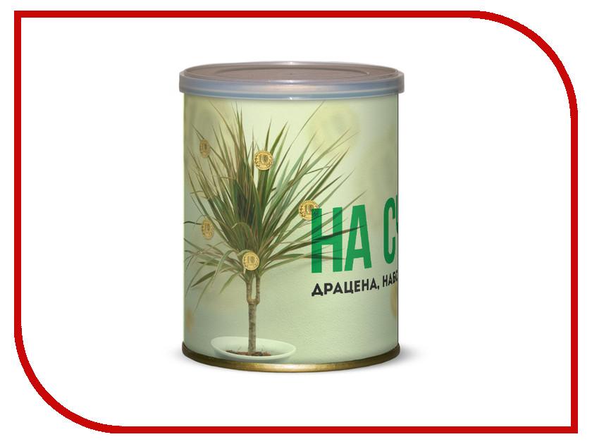 Растение BontiLand Драцена На счастье! 415096