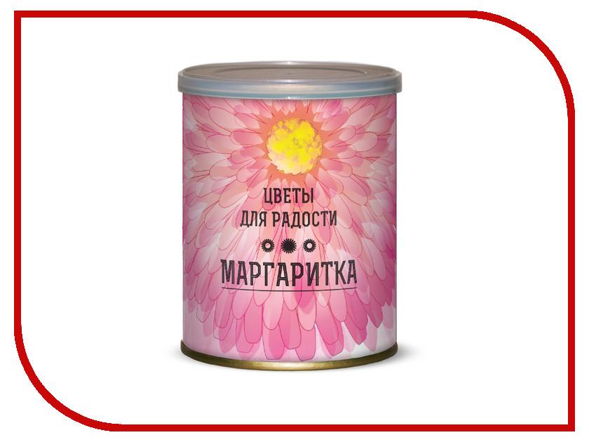Растение BontiLand Цветы для радости. Маргаритки 410909<br>