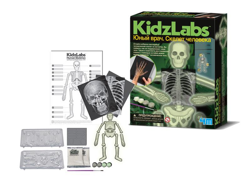 Игровой набор 4M Юный врач Скелет человека 00-03375