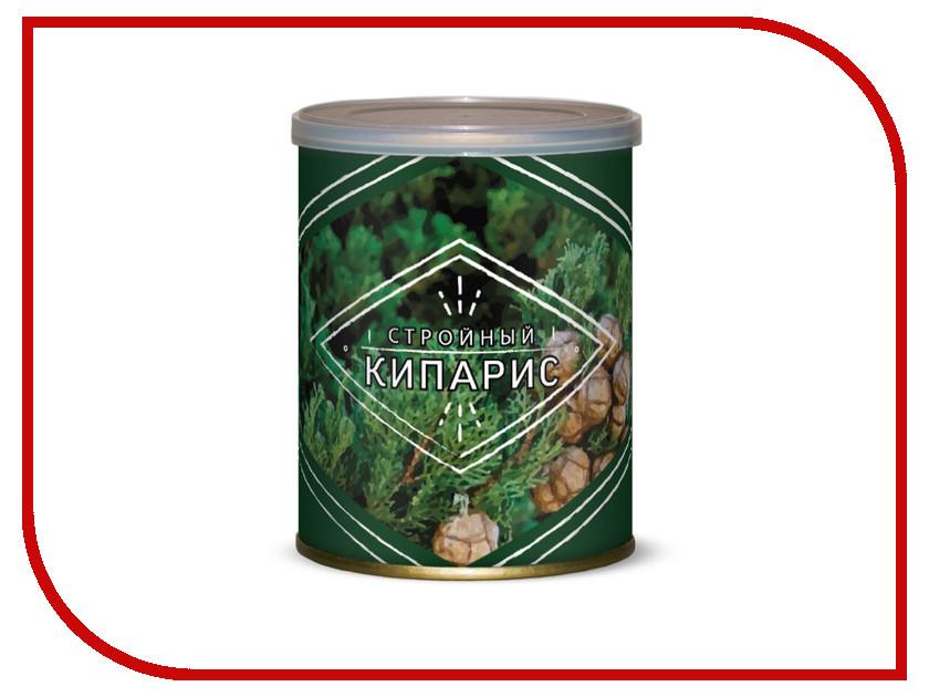 Растение BontiLand Стройный кипарис 411579