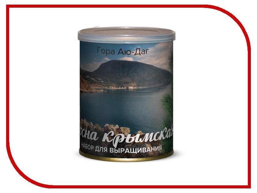 Растение BontiLand Гора Аю-Даг, Сосна Крымская 415027