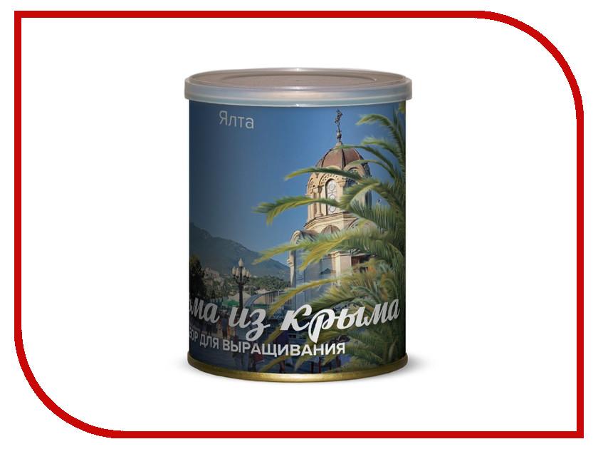 Растение BontiLand Ялта, пальма из Крыма 415034 легенды крыма натуральный крымский травяной чай ялта 40 гр легенды крыма