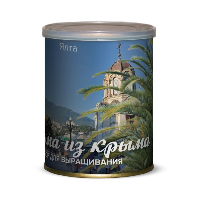 Растение BontiLand Ялта, пальма из Крыма 415034 растение bontiland севастополь пальма из крыма 415041