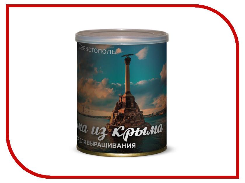 Растение BontiLand Севастополь, пальма из Крыма 415041 casio efr 534sg 7a casio