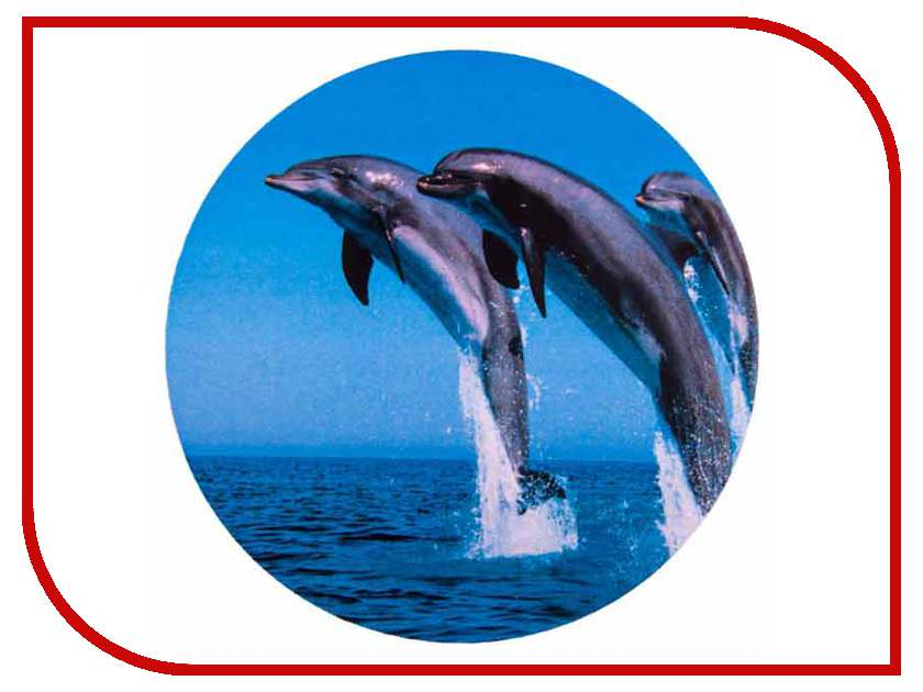 Аксессуар Skyway Дельфины R16/17 S06301012 переводки дельфины