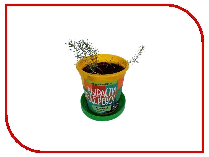 Растение Вырасти дерево! Кипарис Аризонский zk-056 набор для выращивания вырасти дерево ель канадская голубая zk 048