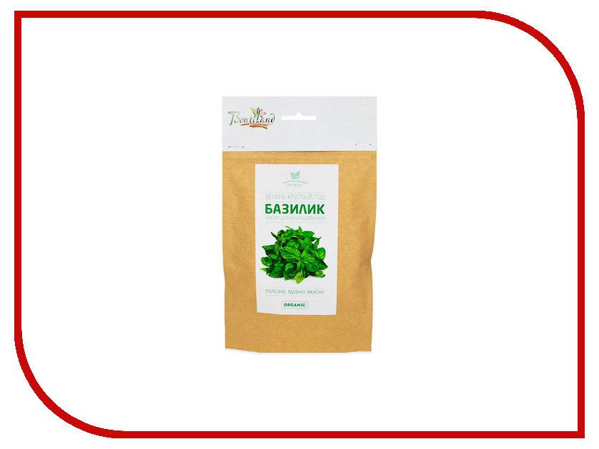 Растение BontiLand Зелень круглый год Базилик 414822