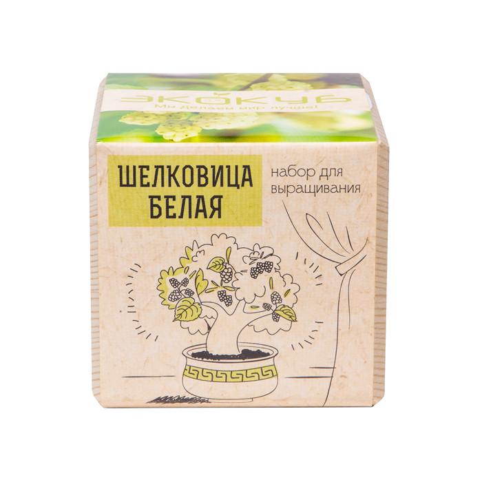 Растение Экокуб Шелковица Белая ECB-01-17